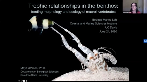Thumbnail for entry BML - Dr. Maya deVries: Trophic relationships in the benthos: feeding morphology and ecology of macroinvertebrates