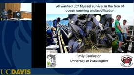 Thumbnail for entry BML - Emily Carrington: All washed up? Mussel survival in the face of ocean warming and acidification