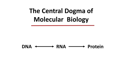 Thumbnail for entry Central dogma lecture