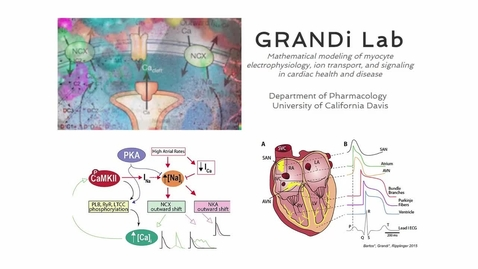 Thumbnail for entry The Grandi Lab