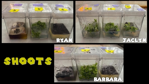 Thumbnail for entry PLS100BL Lab 8: Plant Organogenesis Experimental Demo