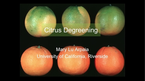 Thumbnail for entry Degreening Citrus - (Arpaia)