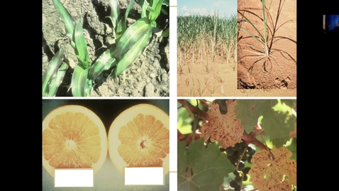 Thumbnail for entry Basics of Soil Plant Relationships April 7