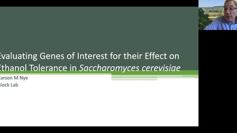 Thumbnail for entry VEN290 - Evaluating genes of interest for their effect on ethanol tolerance in Saccharomyces cerevisiae