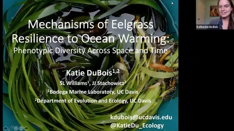 "Thumbnail for entry BML - Dr. Katie DuBois: ""Mechanisms of Eelgrass Resilience to Ocean Warming: Phenotypic Diversity Across Space and Time"""