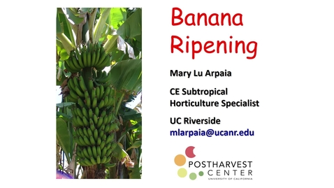 Thumbnail for entry Ripening Bananas - (Arpaia)