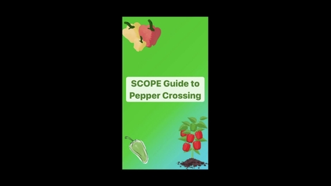 Thumbnail for entry FINAL SCOPE Pepper Crossing