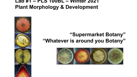 Thumbnail for entry PLS100BL Lab 1: Plant Morphology & Development