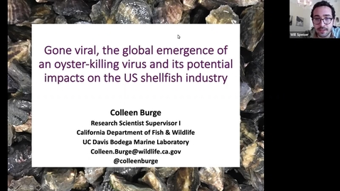 Thumbnail for entry BML - Dr. Colleen Burge: Gone viral, the global emergence of an oyster-killing virus and its potential impacts on the shellfish industry