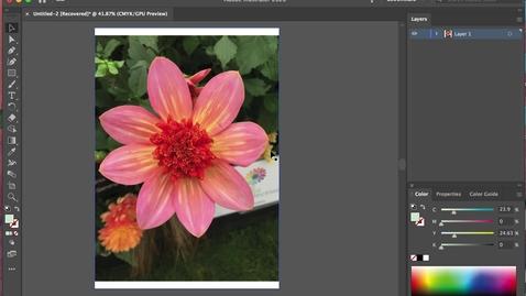 Thumbnail for entry illustrator 1- Tracing + Stroke + Fill