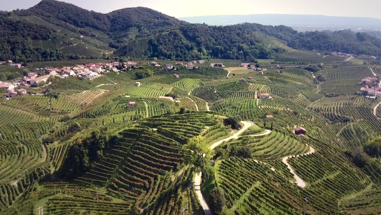 Story of a Wine: The Importance of Being Prosecco