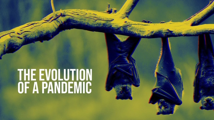The evolution of a pandemic