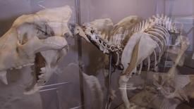 Thumbnail for entry Museo Didattico di Medicina Veterinaria
