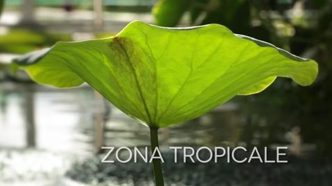 Thumbnail for entry La serra Tropicale del Giardino della Biodiversità