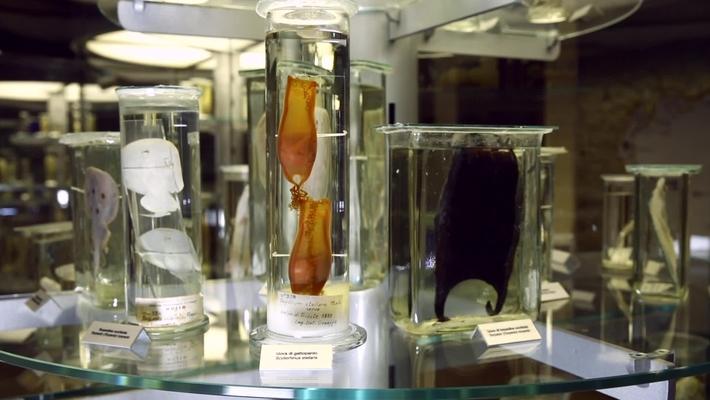 "Museo di Zoologia Adriatica ""Giuseppe Olivi"""
