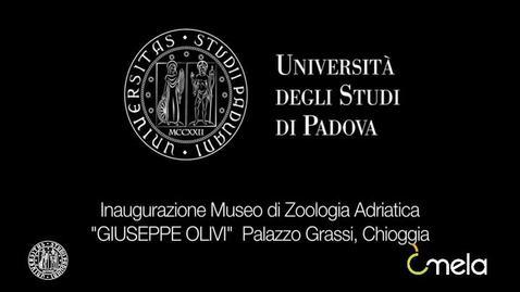 Thumbnail for entry Inaugurazione Museo di Zoologia Adriatica Giuseppe Olivi
