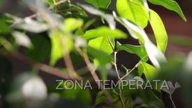 Thumbnail for entry La serre Temperata e Mediterranea del Giardino della Biodiversità