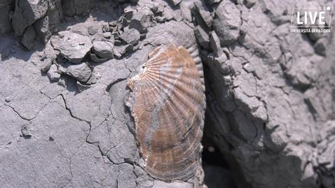 Thumbnail for entry Una giornata alla ricerca dei fossili insieme ai paleontologi dell'università di Padova