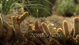 Thumbnail for entry La serra Arida del Giardino della Biodiversità