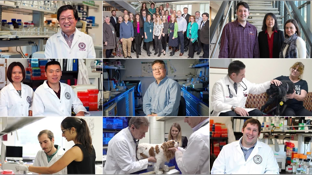 Virginia-Maryland College of Veterinary Medicine: 2019 in Review