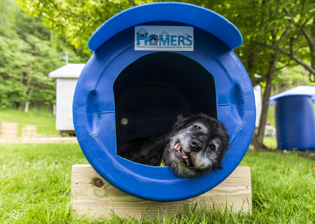 Virginia Tech veterinarians and technicians build emergency relief shelters for local dogs in crisis