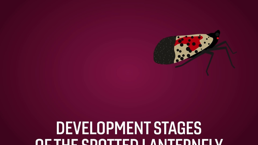 Spotting the highly invasive spotted lanternfly