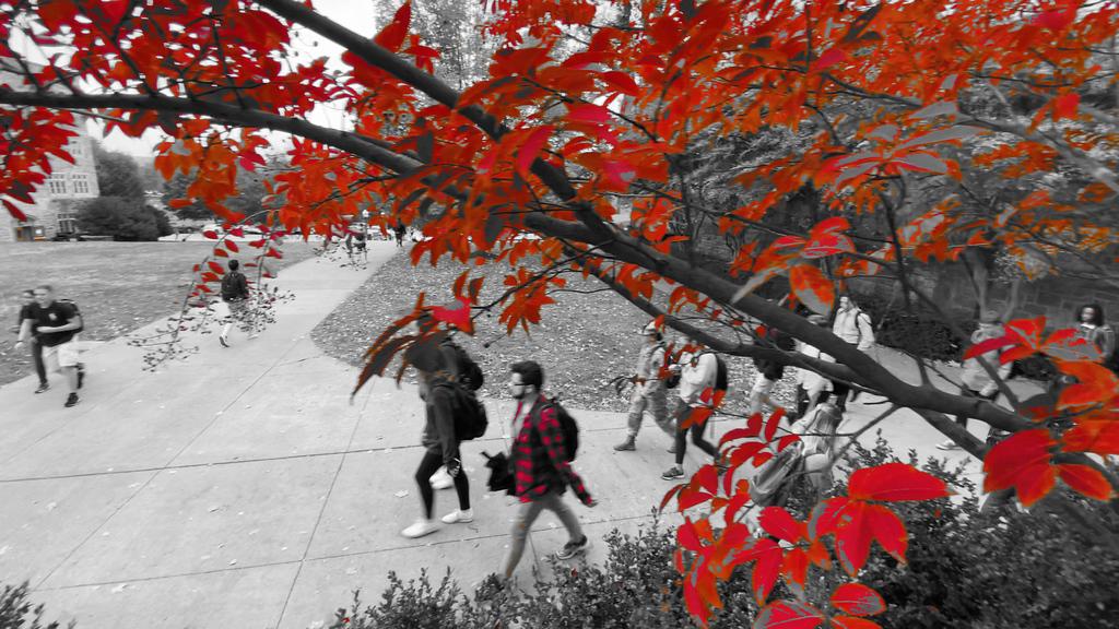 Autumn colors on Virginia Tech's campus