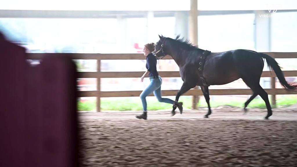 Testing The Efficacy of Equine Therapy Treatments