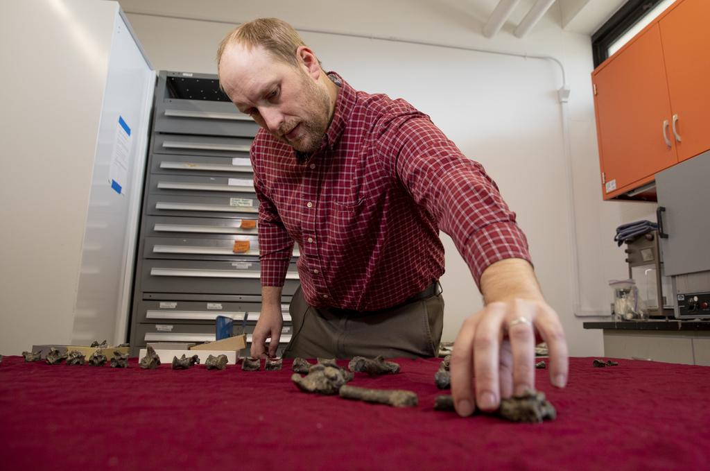 Virginia Tech paleontologist discovers new, miniature relative of Tyrannosaurus rex