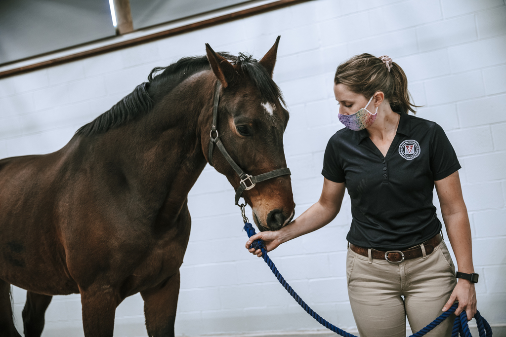 Equine Medical Center continues to provide premier, full-service equine care during COVID-19