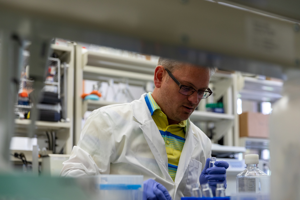 Virginia Tech researcher discovers cellular cause of Lyme arthritis that could open door to cure