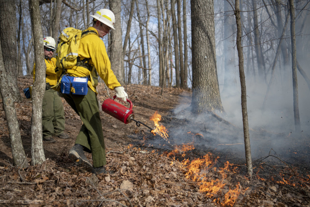 Fire and forest ecology