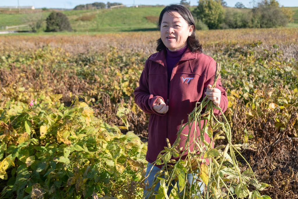 Virginia Tech researchers develop homegrown edamame
