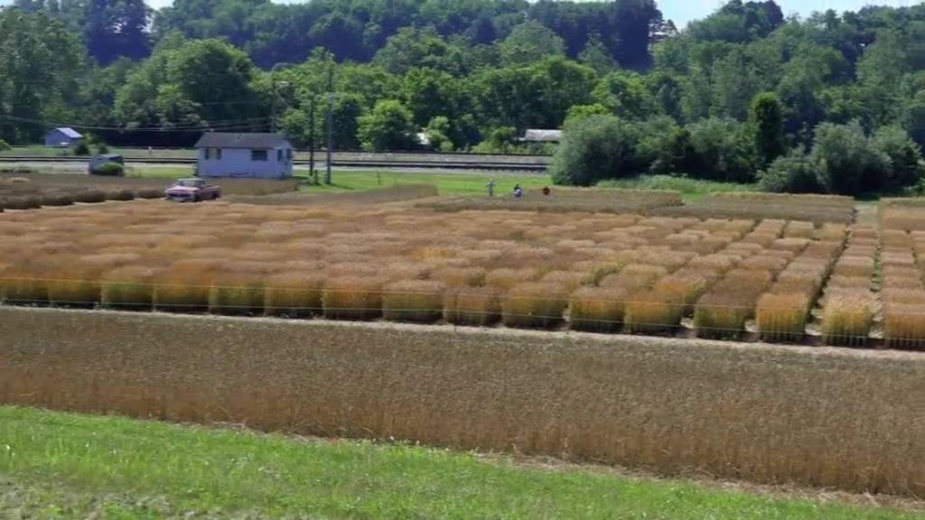 Pamela Northam, First Lady of Virginia, visits Kentland Farm during Virginia Ag Week