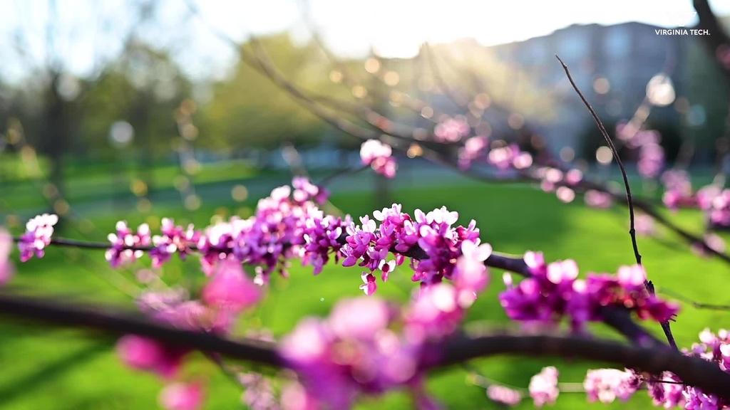 Springtime on the Drillfield