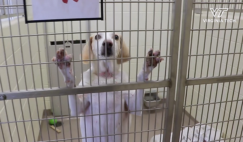 Helping shelter dogs shed their stress