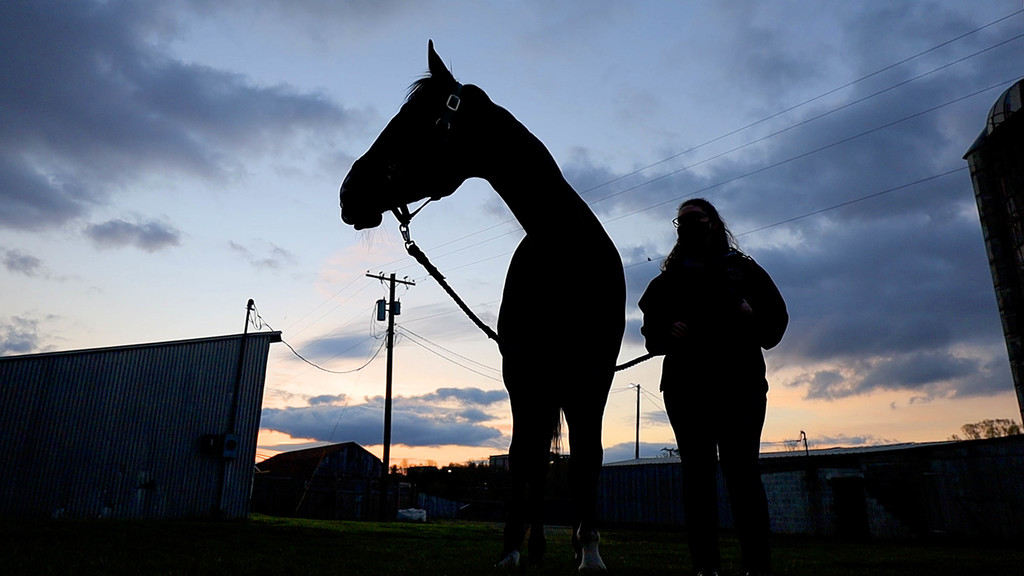Volunteers learn new skills while caring for Hokie Horses