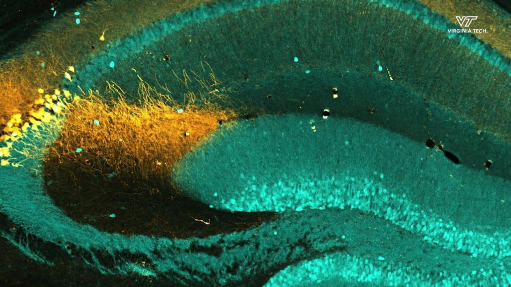 Meet a Neuroscientist: Shannon Farris, Ph.D.
