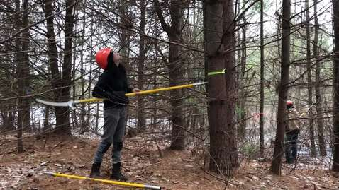 Selecting a Crop Tree to prune.MOV