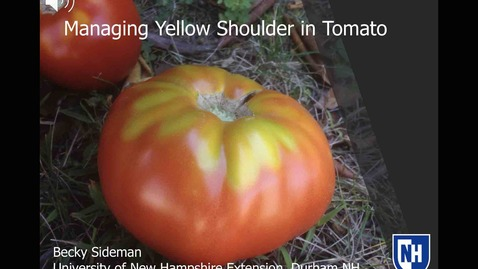 Thumbnail for entry Managing Yellow Shoulder in Tomato