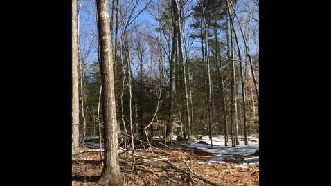 Selecting trees to cut and keep when marking a timber sale