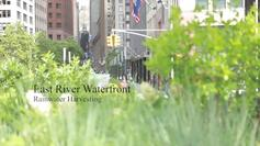 East River Waterfront: Rainwater Harvesting