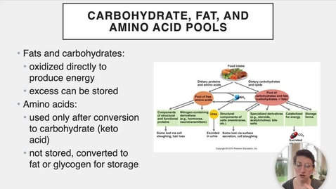 Thumbnail for entry Ch 24 X - Carb, Lipid, and Protein Pools