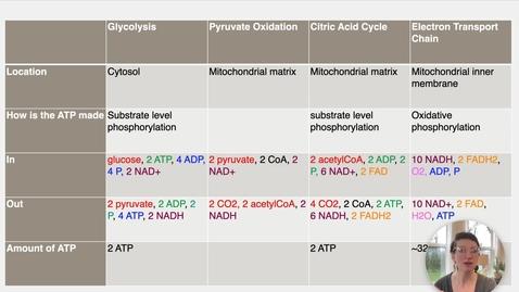 Thumbnail for entry Ch 24 VII - Lactic Acid Fermentation