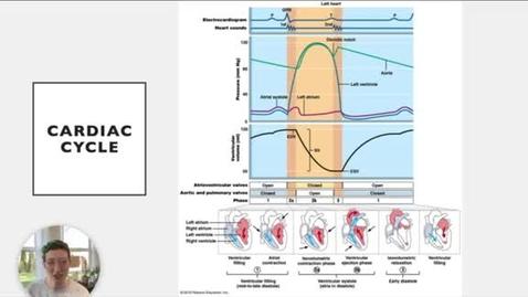 Thumbnail for entry Ch 18 VI - Cardiac Cycle Diagram