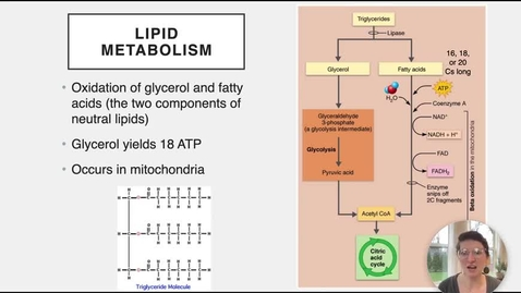 Thumbnail for entry Ch 24 IX - Lipid Metabolism