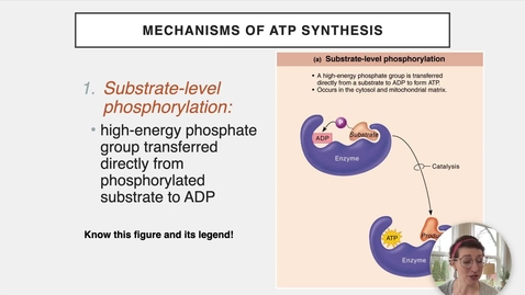 Thumbnail for entry Ch 24 III - ATP Synthesis