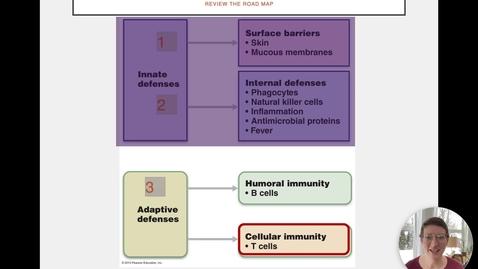 Thumbnail for entry Ch 21 VI - MHC Molecules