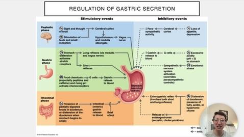 Thumbnail for entry Ch 23 VI - Regulation of Gastric Secretion