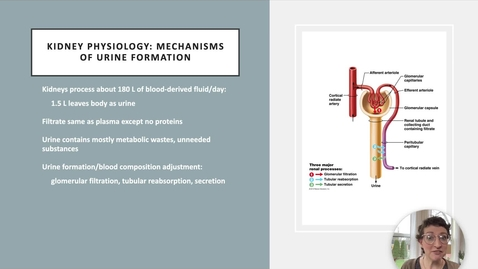 Thumbnail for entry Ch 25 III - Glomerular Filtration